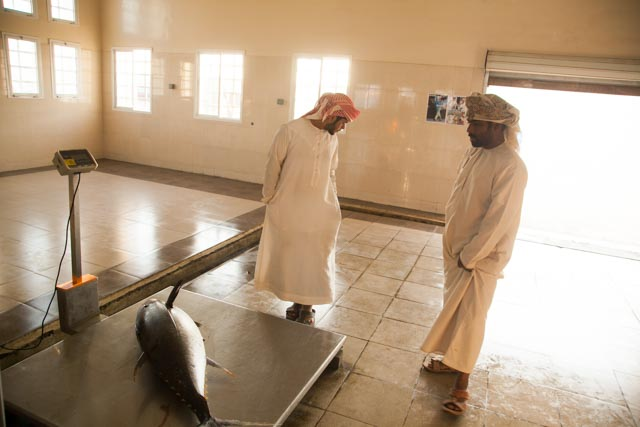 Omani-tuna weighing