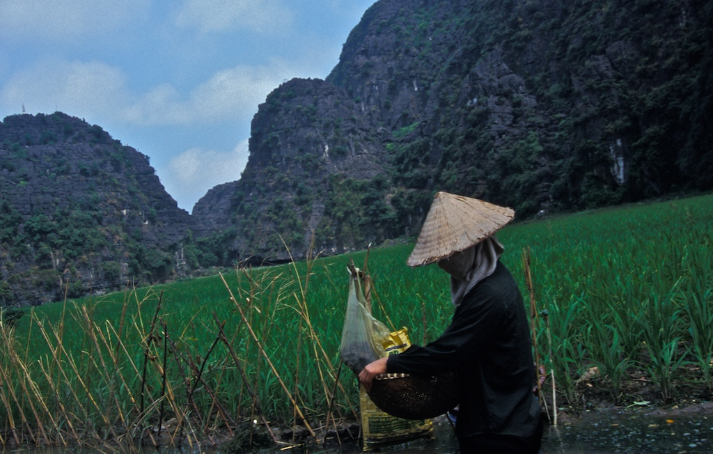 Vietnam-rice field -farmer