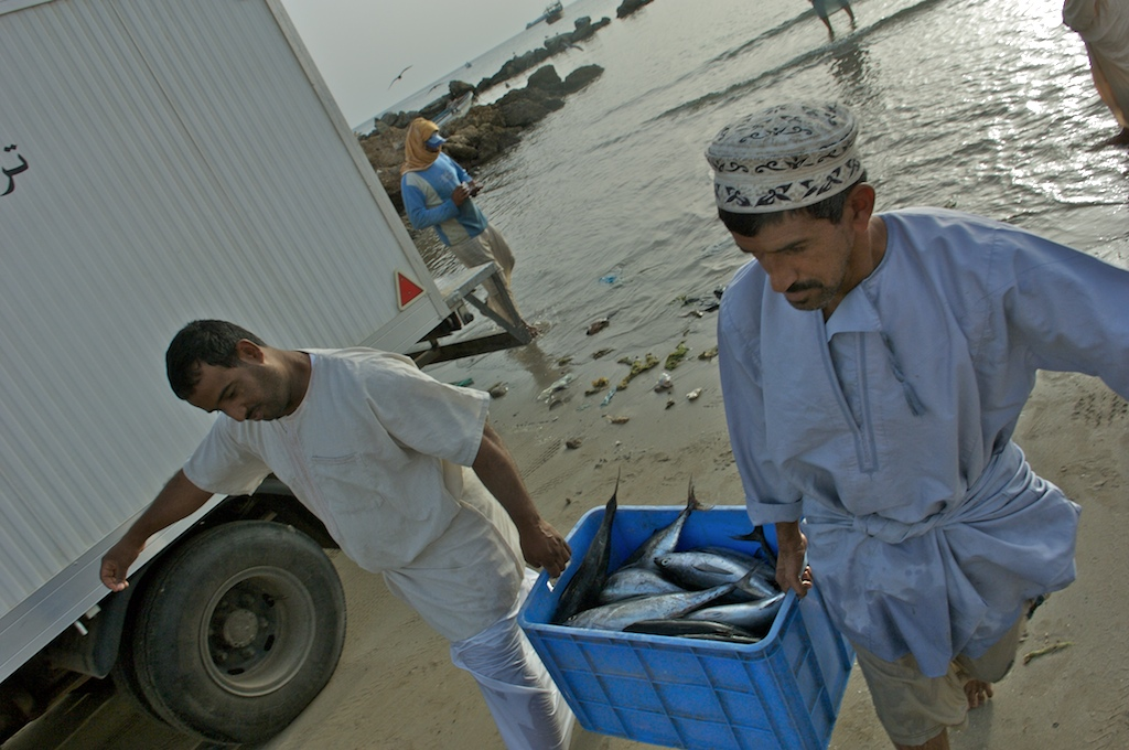 omani fisherman carry fish